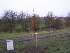 Stromy Blata 004.JPG